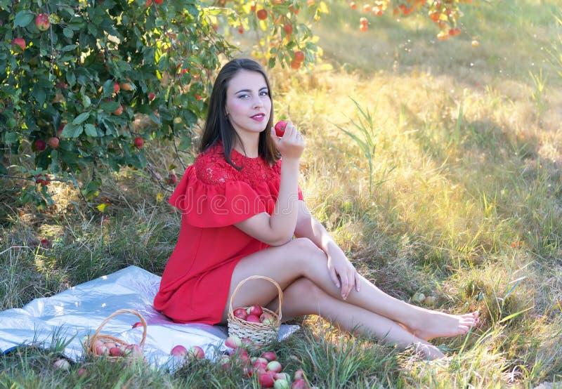 Jeune femme moissonnant des pommes photographie stock libre de droits