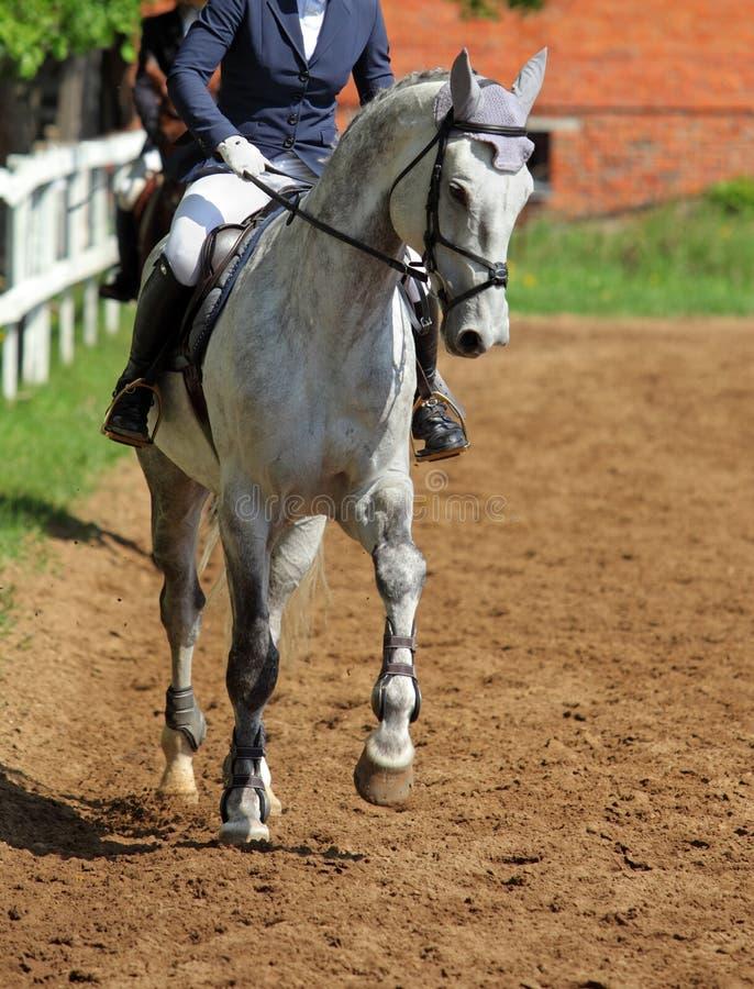 Jeune femme montant le cheval de Trakehner images libres de droits