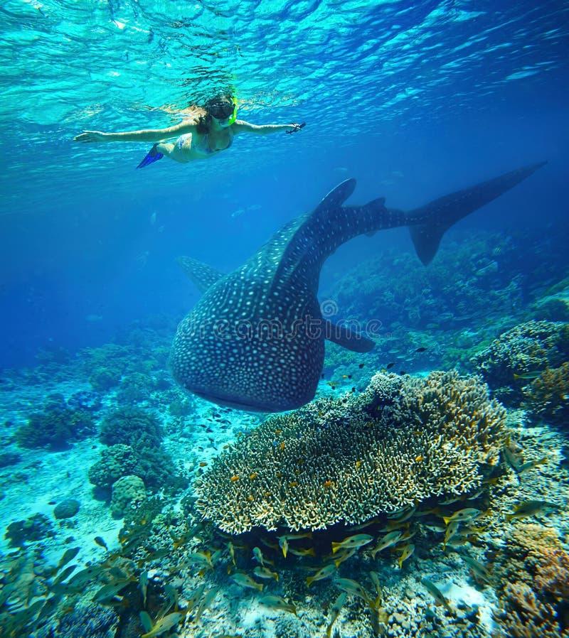Jeune femme naviguant au schnorchel avec le requin de baleine photographie stock libre de droits