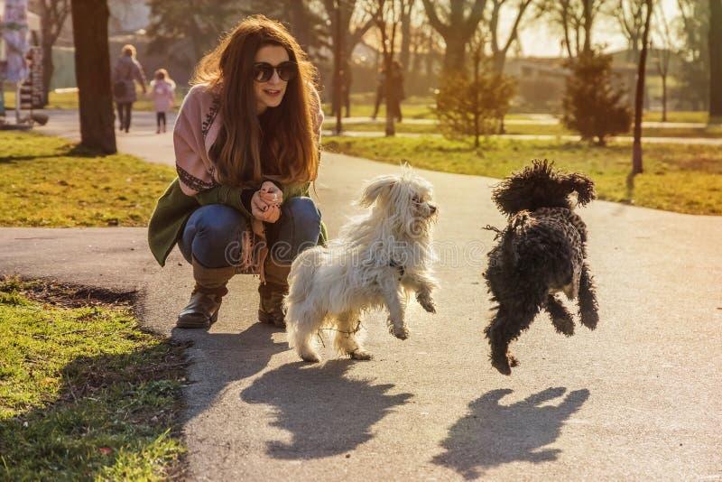 Jeune femme observant deux chiots avoir l'amusement dans le parc un jour ensoleillé photographie stock libre de droits