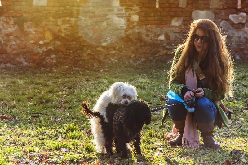 Jeune femme observant et souriant d'un air affecté à deux chiots humping en parc un jour ensoleillé photos libres de droits