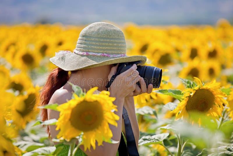 Jeune femme prenant des photos des tournesols. photo stock