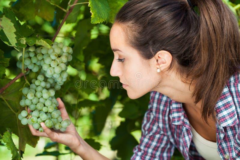Jeune femme regardant des raisins image stock