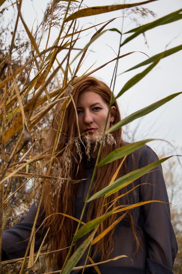 Jeune femme rousse en parc d'automne image stock