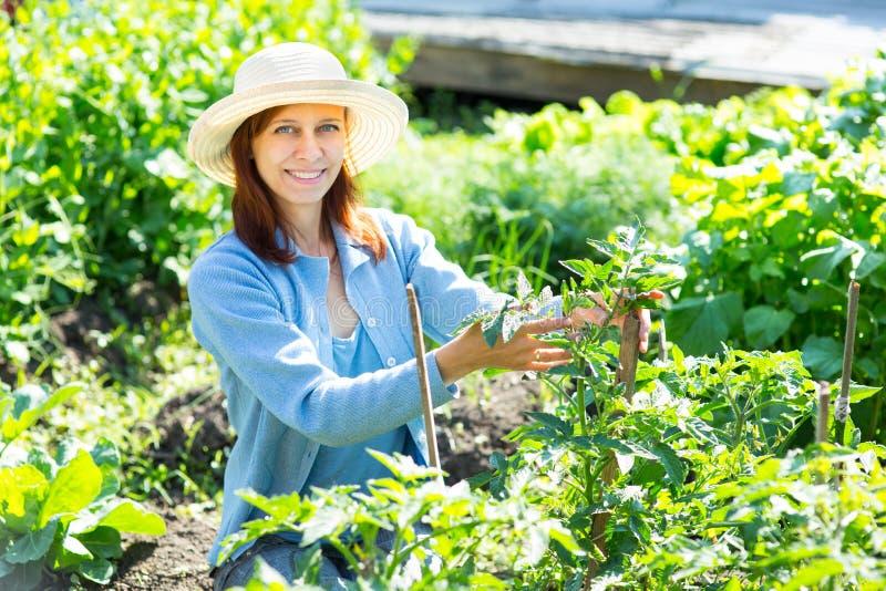 Jeune femme sarclant les lits avec la tomate de pousses dans le jardin photos stock