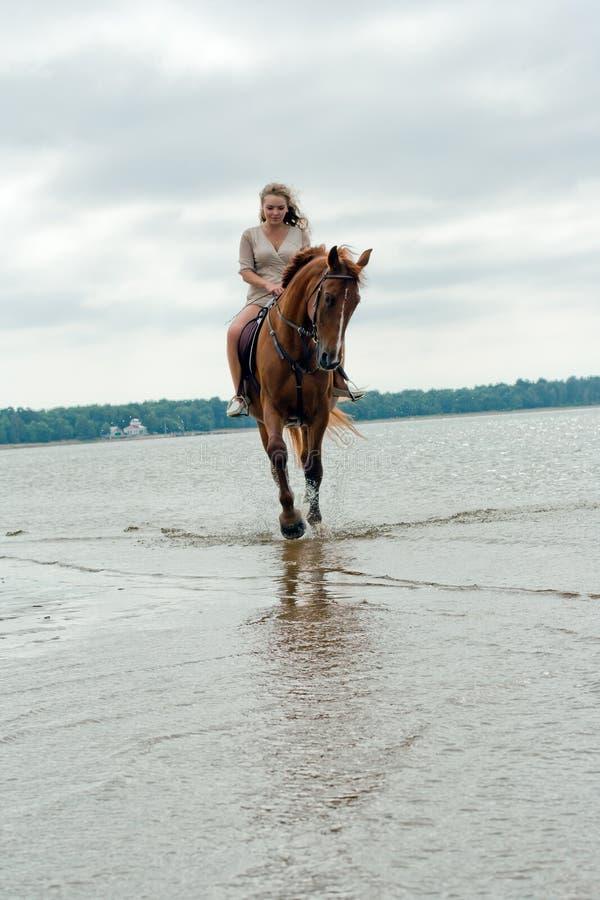 Jeune femme sur un cheval photo libre de droits