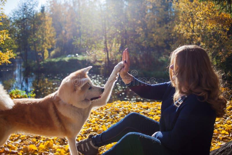 Jeune femme sur une promenade avec son inu d'Akita de race de chien photographie stock libre de droits