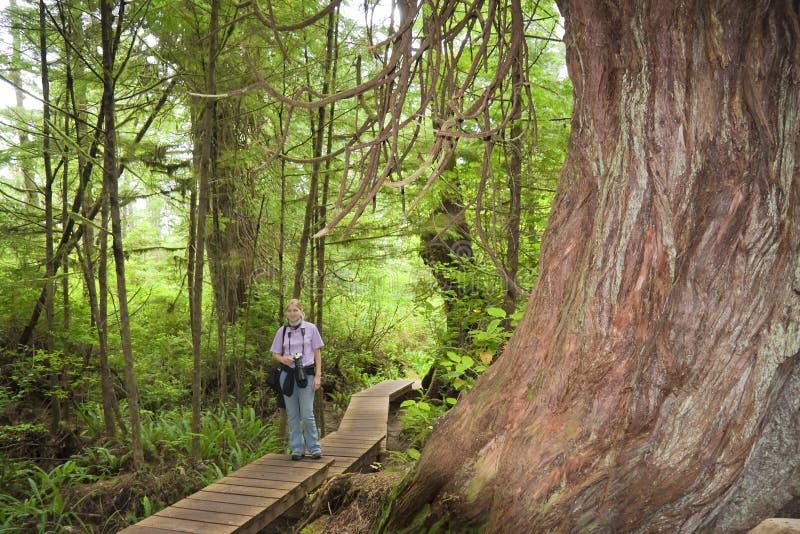 Jeune femme sur une promenade près d'arbre géant images stock