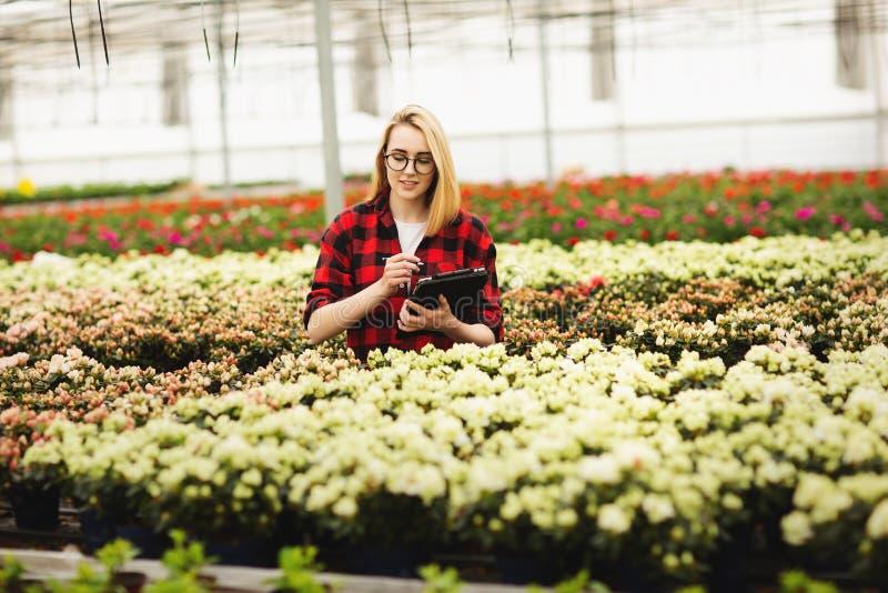 Jeune femme travaillant en serre chaude Fleurs attrayantes de contr?le et de compte de fille, utilisant la tablette photographie stock libre de droits