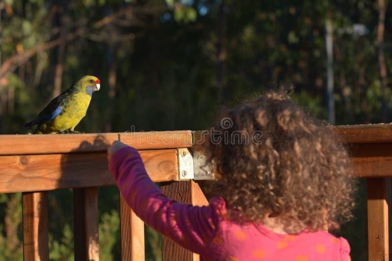 Jeune fille alimentant Rosella Birds verte en Tasmanie Australie photographie stock libre de droits