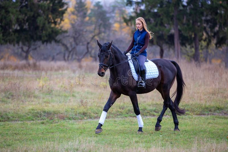 Jeune fille de cavalier trottant sur l'étalon de baie en parc photos libres de droits