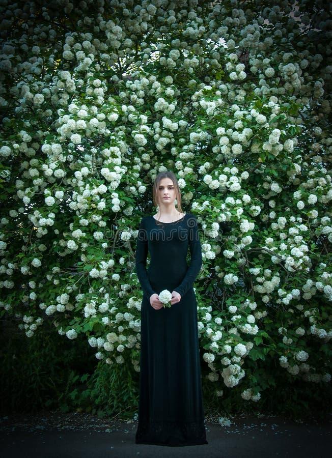 Jeune fille sur un fond de viburnum blanc de floraison images libres de droits