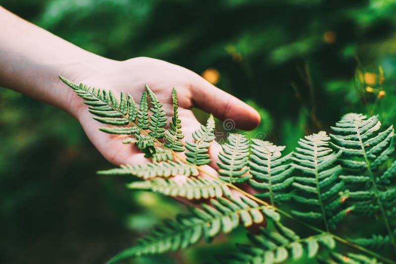Jeune fille touchant la main de Fern Leaf In Summer Park Forest Close Up Of Female de participation Concept de nature, environnem photo libre de droits