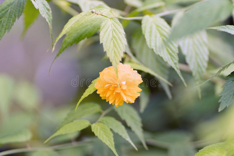 Jeune fleur jaune sur une branche au foyer mou photos stock