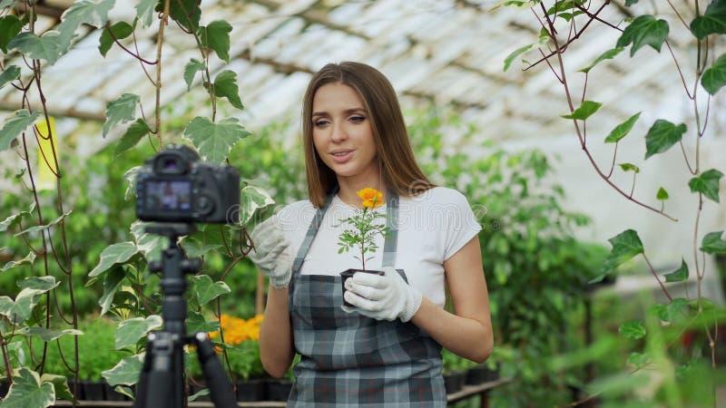 Jeune fleuriste de sourire de femme de blogger dans le blog visuel parlant et de enregistrement de tablier pour son vlog en ligne image libre de droits