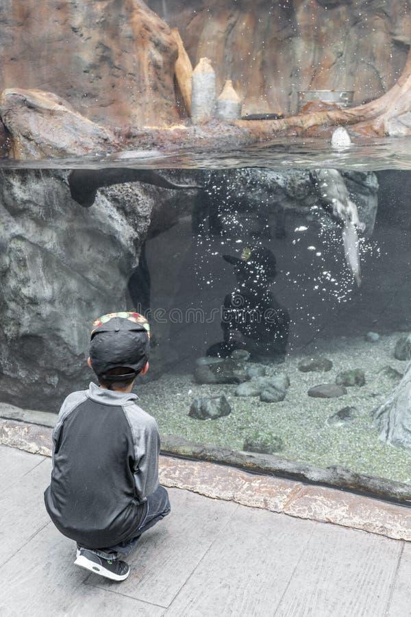 Jeune garçon appréciant l'aquarium photographie stock