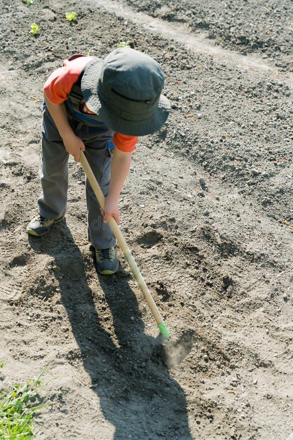 Jeune garçon blond labourant et ratissant et préparant son complot végétal dans un jardin photos stock