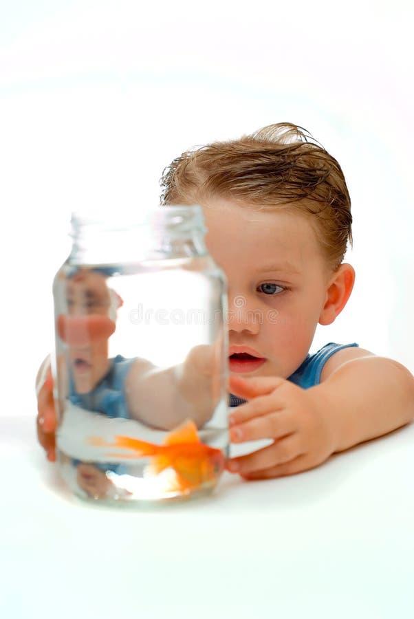 Jeune garçon d'enfant en bas âge avec des goldfis image stock
