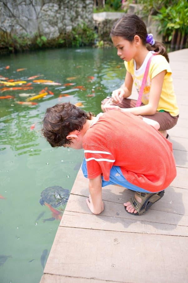 Jeune garçon et sa soeur admirant une jeune tortue photographie stock libre de droits