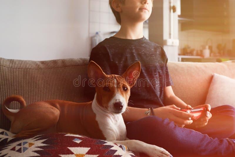 Jeune garçon mignon jouant la console de jeu vidéo posée sur un sofa avec la fin de chiot de chien de basenji dans le salon à la  photos stock