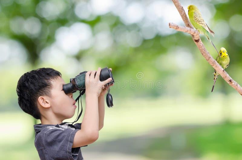 Jeune garçon regardant des oiseaux dans la forêt photographie stock