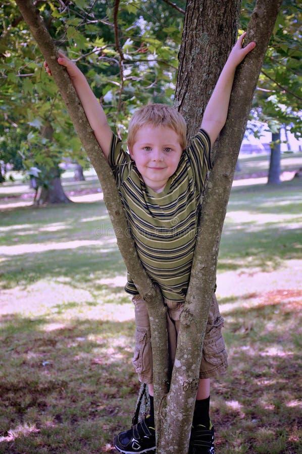 Jeune gar?on jouant dans un arbre images stock