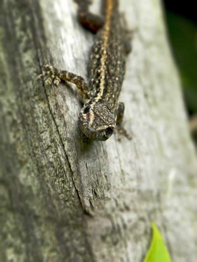 Jeune gecko 2 photos stock