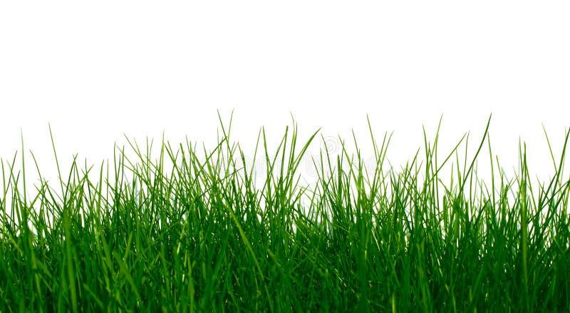 Jeune herbe verte images libres de droits