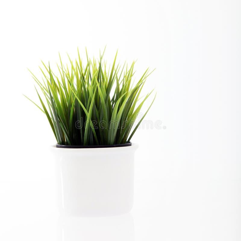 Jeune herbe verte fraîche mise en pot images stock