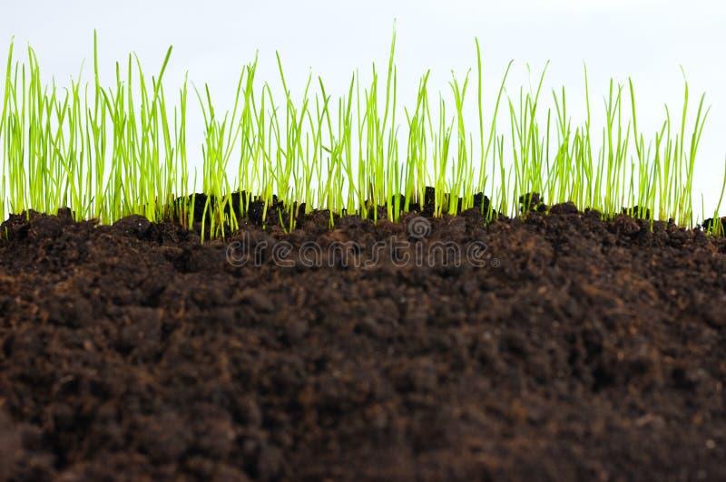 Jeune herbe verte, instruction-macro photos stock