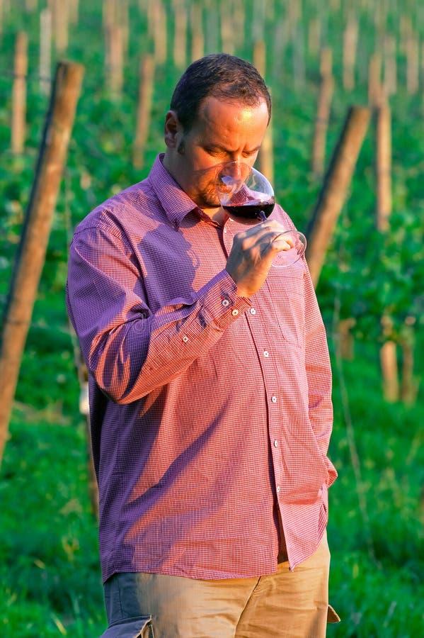 Jeune homme appréciant le vin rouge image stock