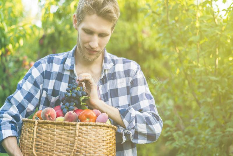 Jeune homme barbu dans la bio ferme naturelle organique d'eco avec la nourriture crue fraîche dans le panier un jour d'été photos libres de droits