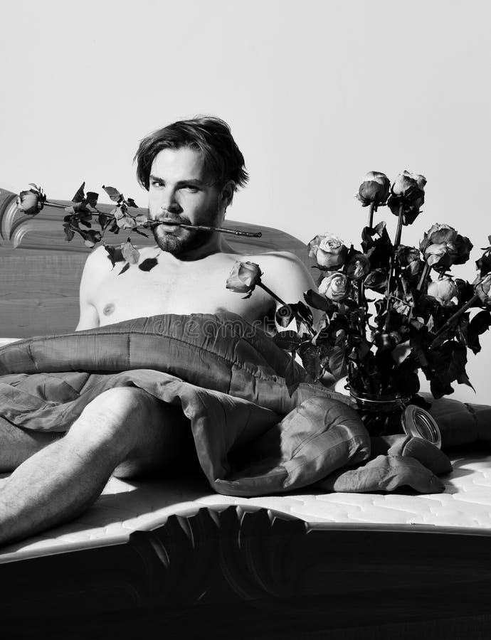 Jeune homme macho sexy barbu bel avec le mensonge élégant de barbe nu sur le lit sous le bouquet se tenant couvrant rouge de l'or photos stock