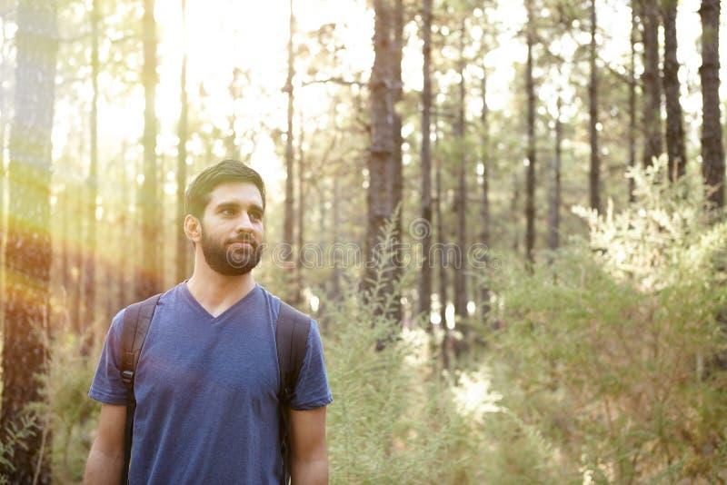 Download Jeune Homme Sérieux Dans Une Forêt De Pin Image stock - Image du loisirs, liberté: 76080153