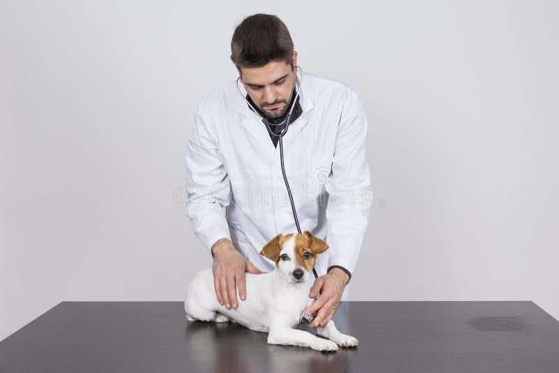 Jeune homme vétérinaire examinant un petit chien mignon à l'aide du steth images stock