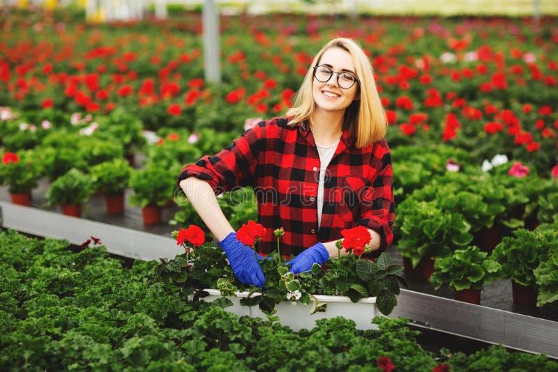 Jeune jardinier f?minin dans les gants fonctionnant en serre chaude, plantant et prenant soin des fleurs image stock