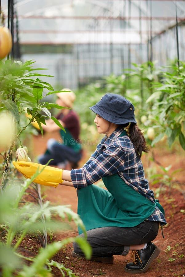 Jeune jardinier Wrapped dans le travail images libres de droits