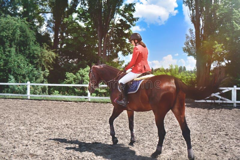 Jeune jolie fille de jockey préparant le cheval pour le tour Chevaux d'amour Fille conduisant un cheval photo libre de droits