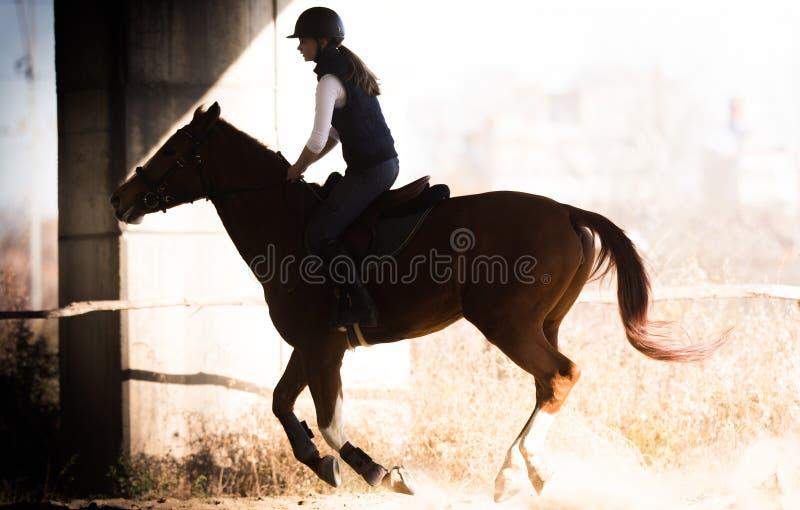 Jeune jolie fille - monte d'un cheval dans le matin d'hiver photographie stock libre de droits
