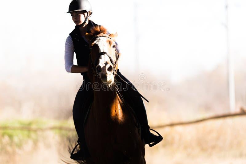 Jeune jolie fille - monte d'un cheval dans le matin d'hiver images stock