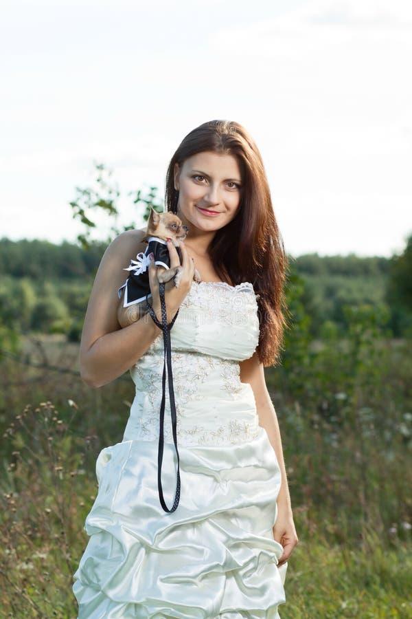 Jeune mariée attirante de brunette avec le chiwawa image libre de droits