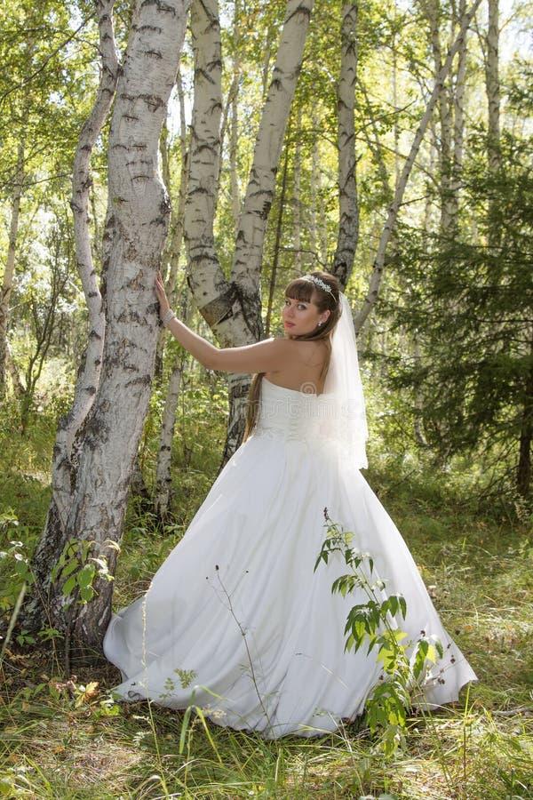 Jeune mariée dans une forêt de bouleau photographie stock libre de droits