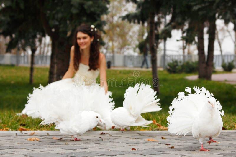 Jeune jeune mariée souriant avec les pigeons blancs au-dessus de l'automne de parc extérieur photos stock