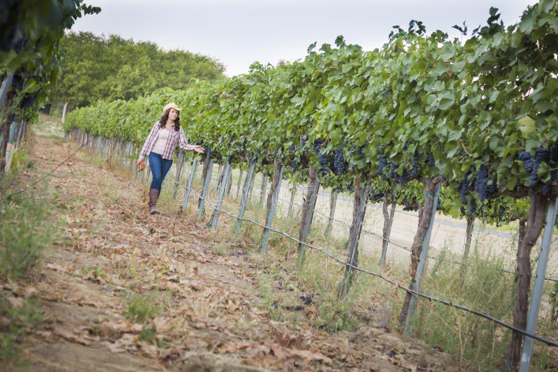 Jeune négociant en vins féminin Inspecting les raisins dans le vignoble images libres de droits