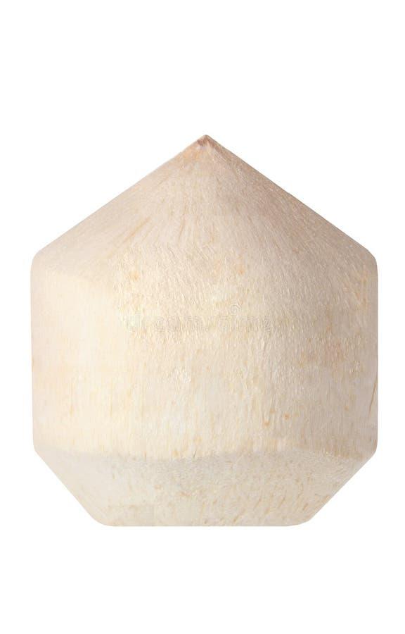 Jeune noix de coco photo libre de droits