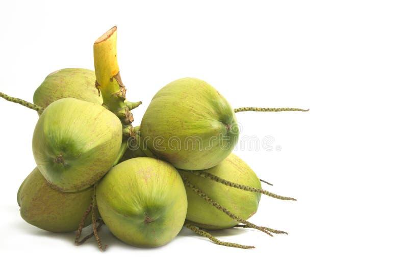 Jeune noix de coco de plan rapproché, isolat photos stock