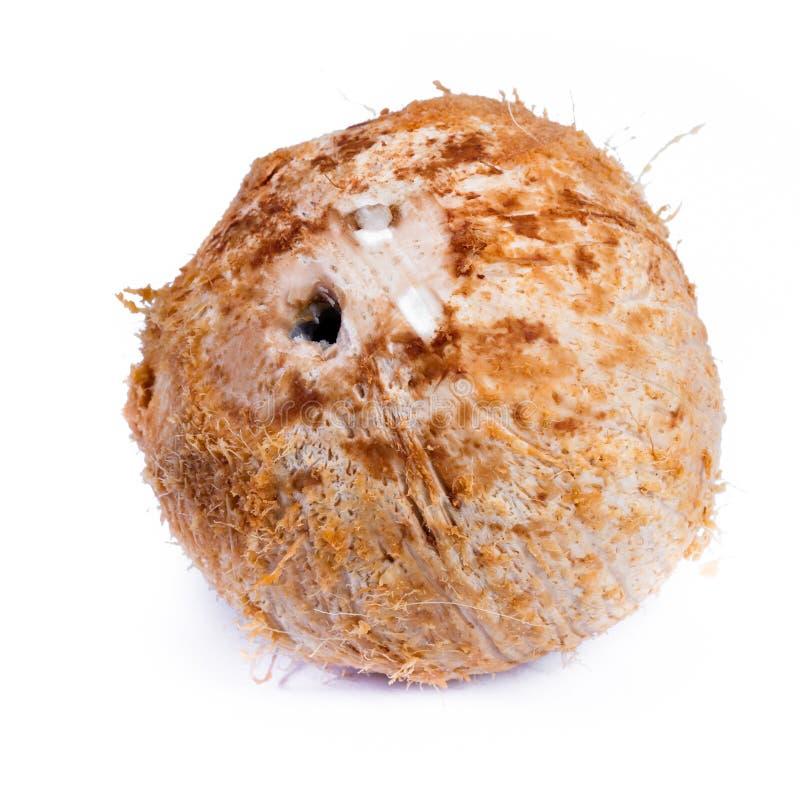 jeune noix de coco fraîche image libre de droits