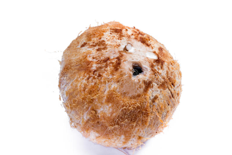 jeune noix de coco fraîche photographie stock