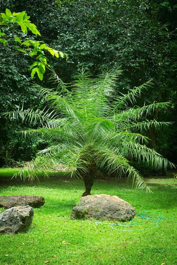 Jeune palmier images libres de droits