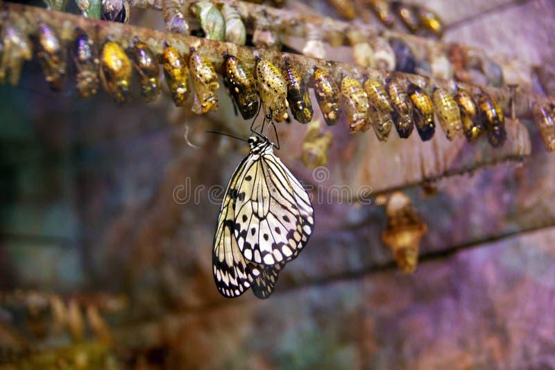 Jeune papillon photos stock